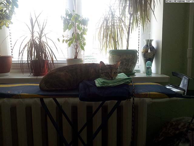 Проня-домохозяйка